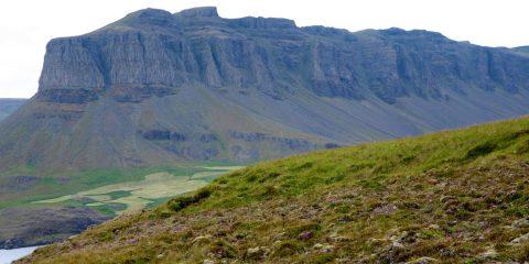 Þyrill